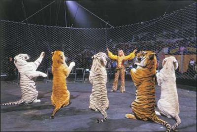 tigres-circo-2
